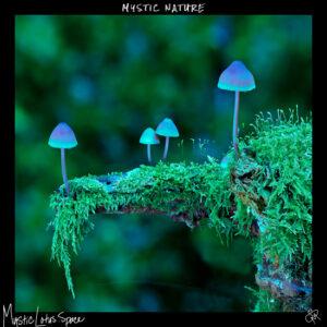 nature mushroom on a ledge artwork by mysticlotus.space