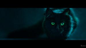 mysterious looking cat desktop wallpaper in 1080