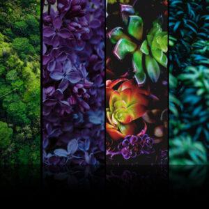 desktop wallpaper with colorful foliage 1080p
